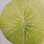 Gordiusz olaj vászon 2020,  50x40 cm  120 000.-Ft